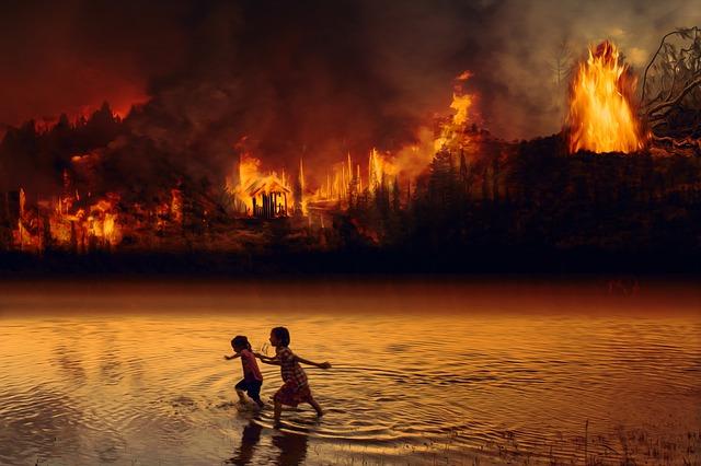 Message de Gaïa suite aux incendies enAmazonie